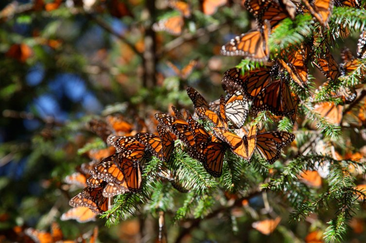 butterflies-on-branch_3