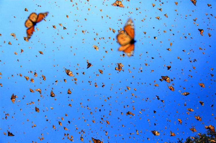 monarch-sky2_3